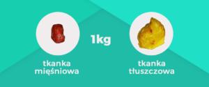 tkanka tłuszczowa, a tkanka mięśniowa